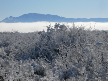 Fog Band in San Simon Valley