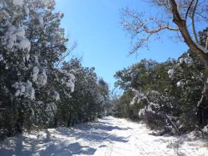 Snow in Cave Creek Canyon